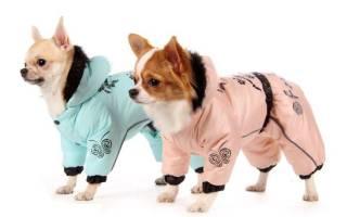Как сшить собаке комбинезон из старой куртки