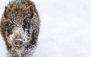 Год свиньи трафареты новогодние