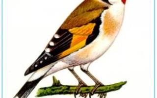 Шаблоны зимующих птиц