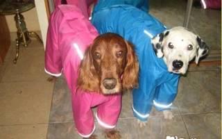 Как из шапки сделать костюм для собаки