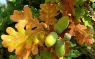 Осенние поделки из желудей и листьев