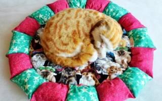 Лежанка для кошек на батарею