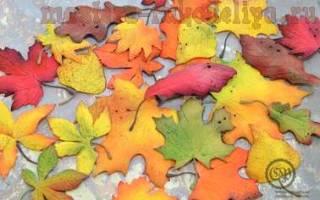 Осенние листья из фоамирана шаблоны
