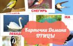 Птички для оформления детского сада картинки