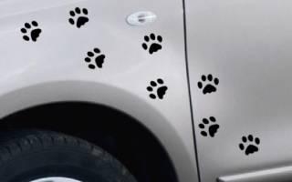 Шаблон лапки кошки