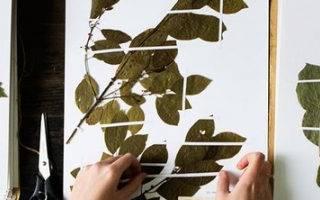 Как правильно сделать гербарий из листьев деревьев