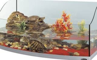 Домик для черепахи сухопутной