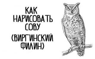 Контур совы рисунок