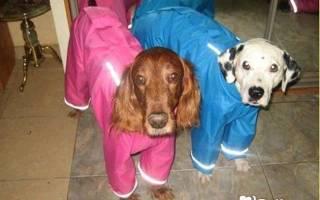 Выкройка жилетки для собаки