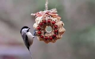 Как сделать съедобную кормушку для птиц