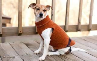 Выкройка костюма для собаки с размерами