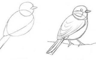 Птички на ветке рисунок