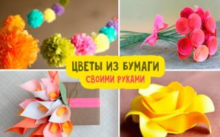 Цветы из гофрированной бумаги шаблоны для вырезания