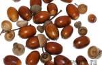 Как сделать муравья из желудей