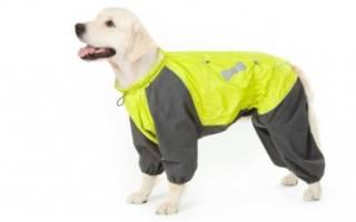 Как сшить куртку для собаки
