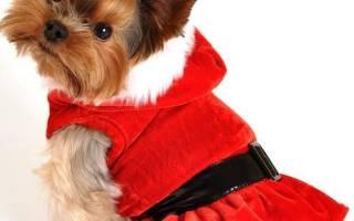 Выкройки одежды для собак мелких йорков