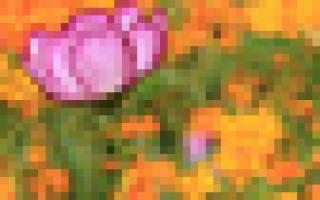 Аппликация цветка из бумаги шаблоны