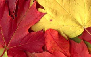 Поделки из осенних листочков
