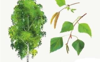 Силуэты деревьев картинки для детей