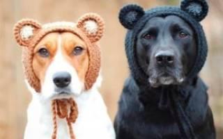 Сшить шапку собаке