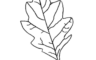Трафареты листьев деревьев для вырезания из бумаги