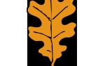 Лист яблони шаблон