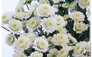 Поделки из флористической губки